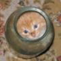 Красивая картинка для аватарки из категории Животные #1692