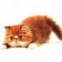 Оригінальна картинка для аватарки из категории Тварини #1697