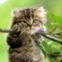 Бесплатная ава из категории Животные #1698