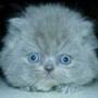 Крута картинка для аватарки из категории Тварини #1701