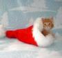 Оригинальная картинка для аватарки из категории Новогодние #2581