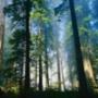 Красивая автрака из категории Природа #2979