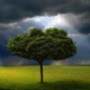 Оригінальна картинка для аватарки из категории Природа #3002