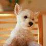 Красивая автрака из категории Собаки #3180