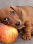 Прикольная ава из категории Собаки #3182