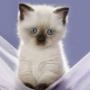 Оригинальная картинка для аватарки из категории Коты и кошки #3428