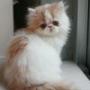 Оригинальная ава из категории Коты и кошки #3433