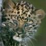 Прикольная картинка для аватарки из категории Коты и кошки #3438