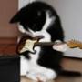 Крутая ава из категории Коты и кошки #3441