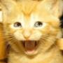 Крутая картинка для аватарки из категории Коты и кошки #3443