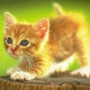 Крутая картинка для аватарки из категории Коты и кошки #3444