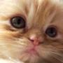 Прикольная ава из категории Коты и кошки #3447