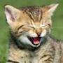 Бесплатная ава из категории Коты и кошки #3451