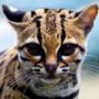 Оригинальная автрака из категории Коты и кошки #3457