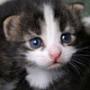Прикольная автрака из категории Коты и кошки #3460