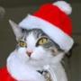 Красивая картинка для аватарки из категории Коты и кошки #3461