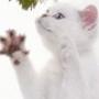 Красивая ава из категории Коты и кошки #3465
