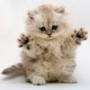 Крутая картинка для аватарки из категории Коты и кошки #3466