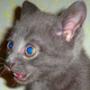 Бесплатная ава из категории Коты и кошки #3469