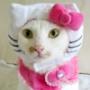 Бесплатная ава из категории Коты и кошки #3470