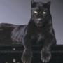 Красивая картинка для аватарки из категории Коты и кошки #3472