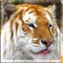 Оригинальная автрака из категории Коты и кошки #3474
