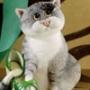 Прикольная картинка для аватарки из категории Коты и кошки #3477