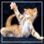 Бесплатная ава из категории Коты и кошки #3481