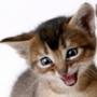 Оригинальная картинка для аватарки из категории Коты и кошки #3482