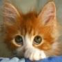 Оригинальная картинка для аватарки из категории Коты и кошки #3483