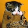 Крутая картинка для аватарки из категории Коты и кошки #3485