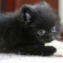 Прикольная автрака из категории Коты и кошки #3486