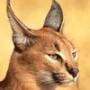 Оригинальная картинка для аватарки из категории Коты и кошки #3488