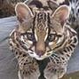Красивая картинка для аватарки из категории Коты и кошки #3491