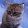 Оригинальная ава из категории Коты и кошки #3493