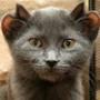 Бесплатная автрака из категории Коты и кошки #3494