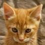 Бесплатная автрака из категории Коты и кошки #3495