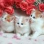 Бесплатная автрака из категории Коты и кошки #3498