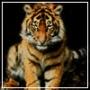 Прикольная автрака из категории Коты и кошки #3499
