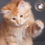 Красивая картинка для аватарки из категории Коты и кошки #3500
