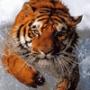 Прикольная ава из категории Коты и кошки #3506