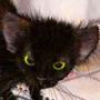Прикольная ава из категории Коты и кошки #3510