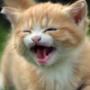 Оригинальная ава из категории Коты и кошки #3513