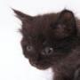 Красивая ава из категории Коты и кошки #3516