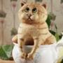 Бесплатная ава из категории Коты и кошки #3519