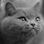 Красивая автрака из категории Коты и кошки #3521