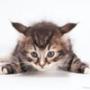 Оригинальная автрака из категории Коты и кошки #3523