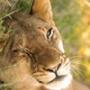 Бесплатная картинка для аватарки из категории Коты и кошки #3527