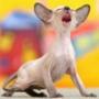 Бесплатная автрака из категории Коты и кошки #3530