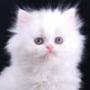 Оригинальная ава из категории Коты и кошки #3533